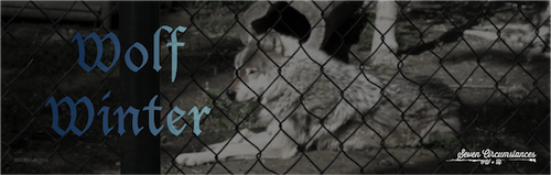 6 Wolf Winter2