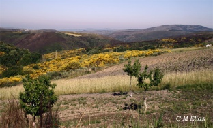The Coroa Mountains, Moimenta zone on the border, where the landscape is formed by open land and woods. (Photo: CM Elias)