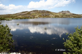 Cerra Serrada in the Montesinho Natural Park is covered by low hills, rocky outcrops and low tundra-like shrubs. (Photo: CM Elias)