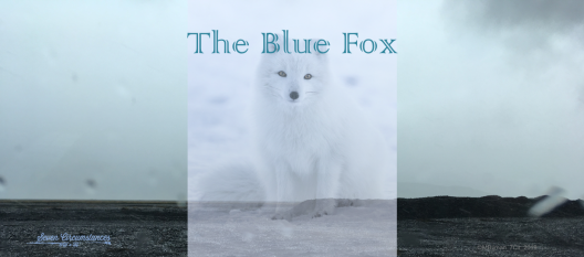 11 The Blue Fox