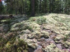 Bronze Age Burial Site of Sammallahdenmäki (Photo by M.F. O'Brien, Finland, 2017)